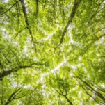 How can Green Bonds catalyse investments in biodiversity and sustainable land-use projects?